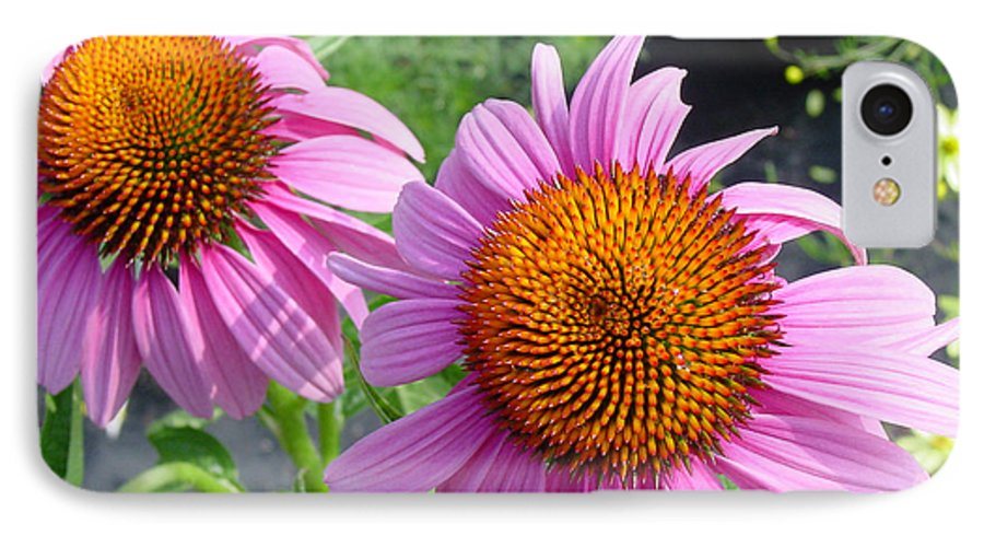 Flower IPhone 7 Case featuring the photograph Purple Coneflowers by Suzanne Gaff