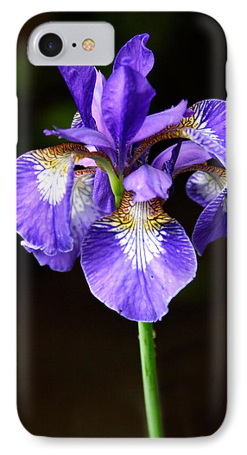 3scape IPhone 7 Case featuring the photograph Purple Iris by Adam Romanowicz