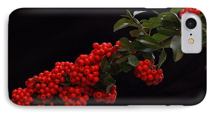 Winter IPhone 7 Case featuring the photograph Pyracantha Berries On Black - Pennsylvania by Anna Lisa Yoder