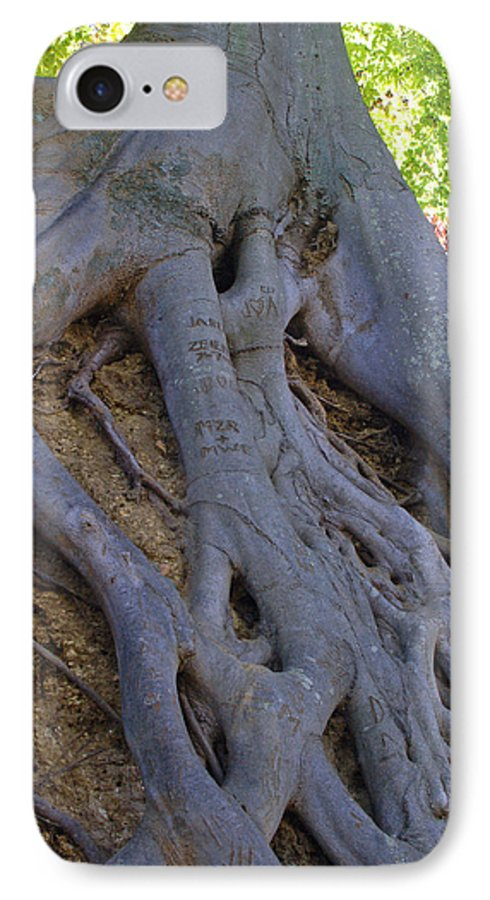 Tree IPhone 7 Case featuring the photograph Roots by Suzanne Gaff