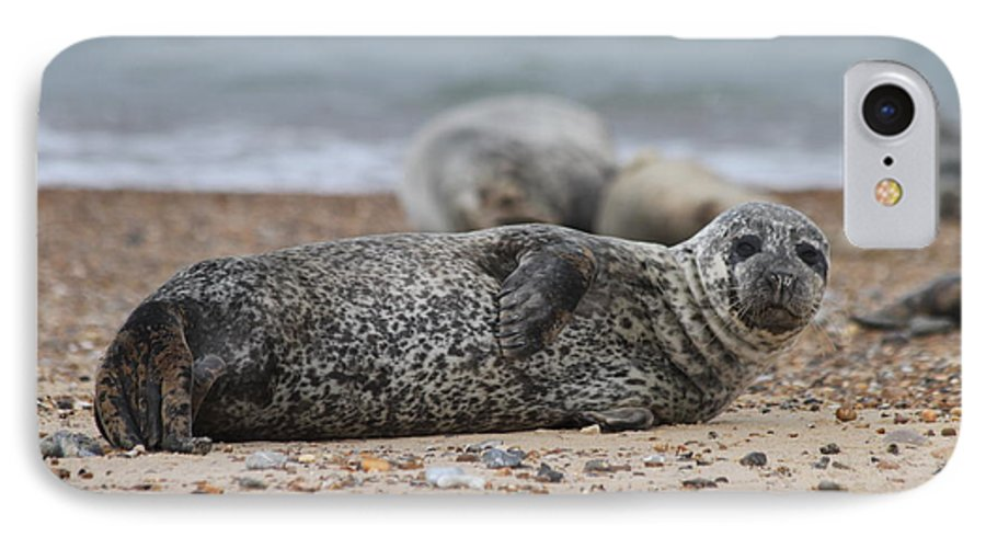 Seal IPhone 7 Case featuring the photograph Seal Pup On Beach by Gordon Auld