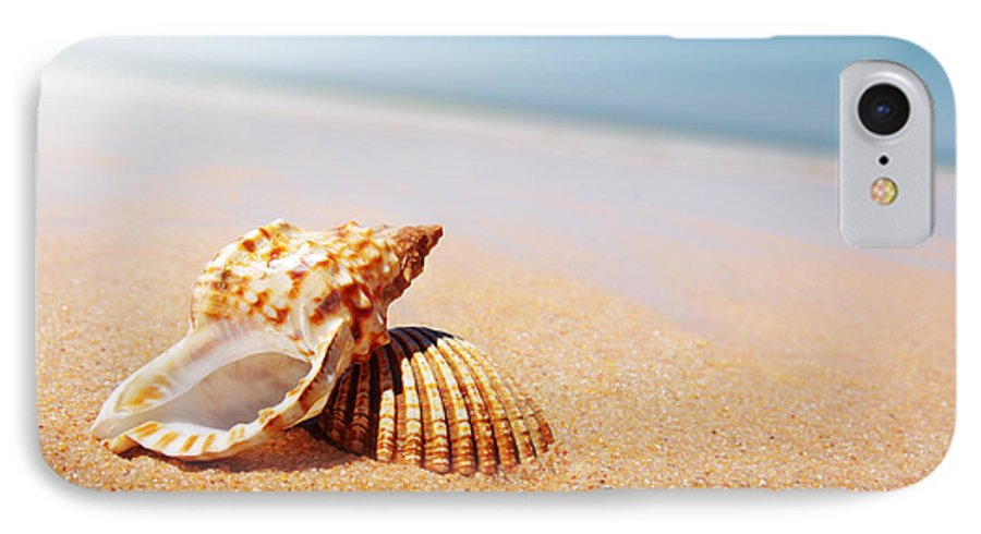 Abstract IPhone 7 Case featuring the photograph Seashell And Conch by Carlos Caetano