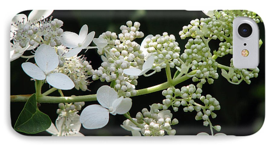 Hydrangea IPhone 7 Case featuring the photograph Simply by Amanda Barcon