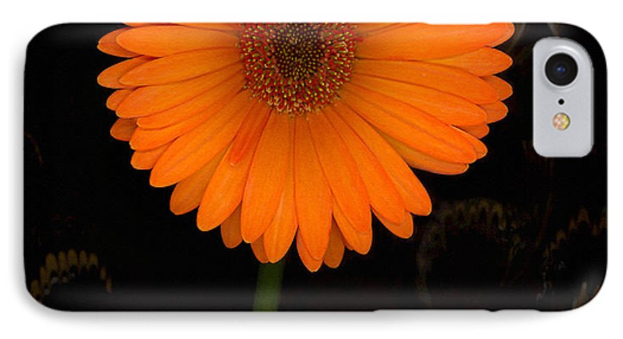 Gerbera Daisy IPhone 7 Case featuring the photograph Standing Tall by Suzanne Gaff