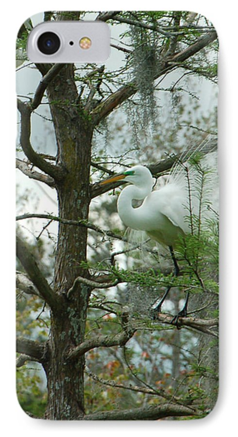 Egret IPhone 7 Case featuring the photograph The Mating Dance by Suzanne Gaff