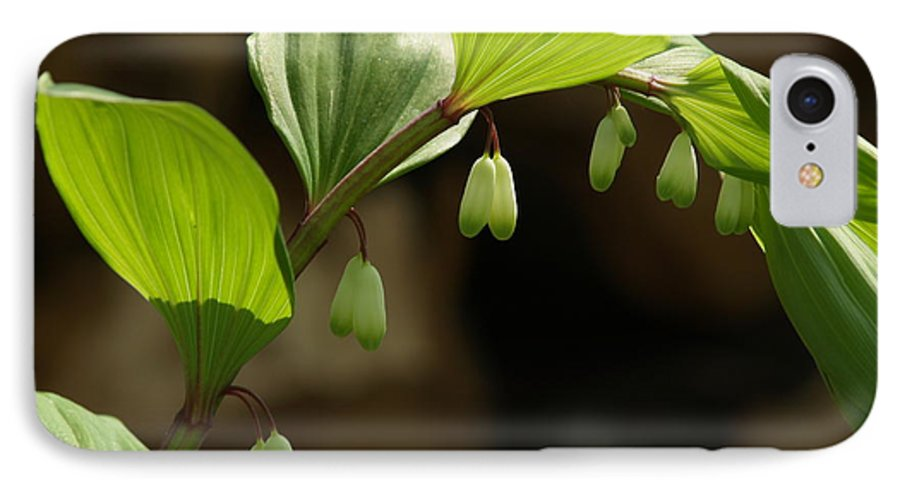 Solomon's Seal IPhone 7 Case featuring the photograph Variegated Solomon's Seal In Spring - Pennsylvania by Anna Lisa Yoder