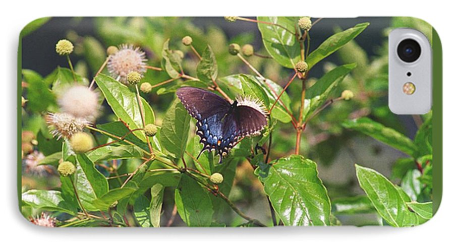 Butterfly IPhone 7 Case featuring the photograph 080706-6 by Mike Davis