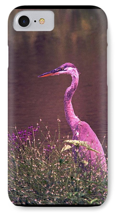 Great Blue Heron IPhone 7 Case featuring the photograph 080706-12 by Mike Davis