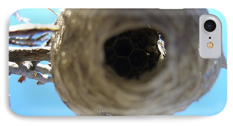 Photograph Bee Hive Blue Sky Branch Insect IPhone 7 Case featuring the photograph Bee Hive by Seon-Jeong Kim