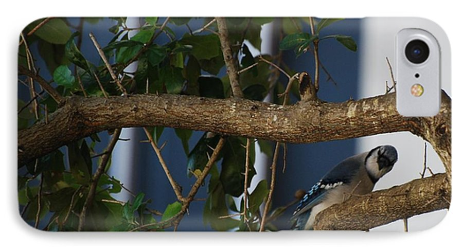 Birds IPhone 7 Case featuring the photograph Blue Bird by Rob Hans