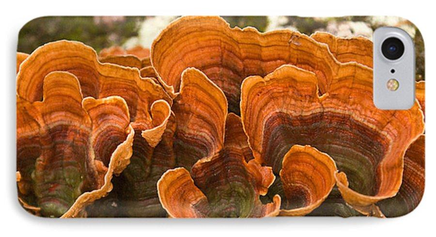Bracket IPhone 7 Case featuring the photograph Bracket Fungi by Douglas Barnett