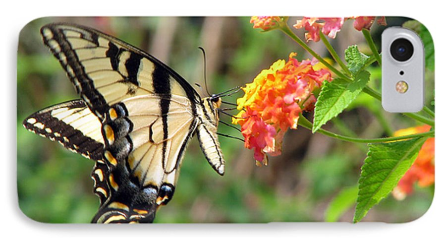 Butterfly IPhone 7 Case featuring the photograph Butterfly by Amanda Barcon