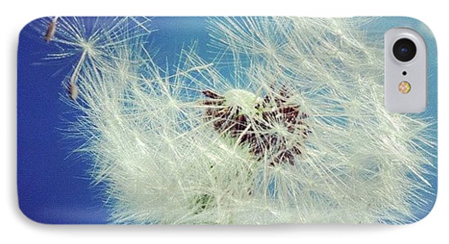 Dandelion IPhone 7 Case featuring the photograph Dandelion And Blue Sky by Matthias Hauser