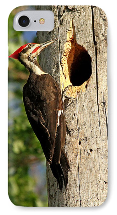 Woodpecker IPhone 7 Case featuring the photograph Pileated #26 by James F Towne