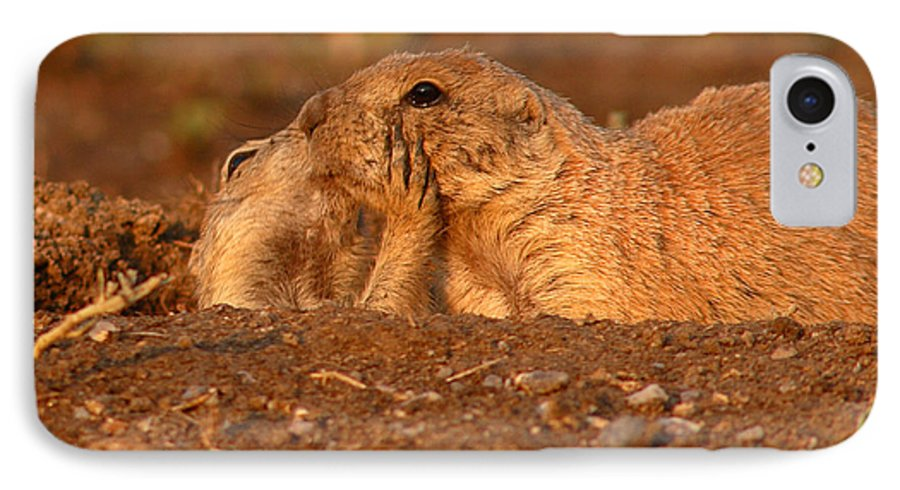 Prairie Dog IPhone 7 Case featuring the photograph Prairie Dog Tender Sunset Kiss by Max Allen