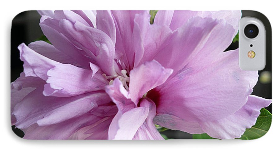 Phoyography.hibiscus Flower Floral Bloom Bush Pink IPhone 7 Case featuring the photograph So Pink by Karin Dawn Kelshall- Best