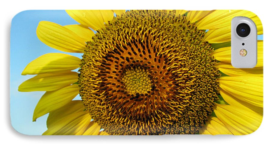 Sunflower IPhone 7 Case featuring the photograph Sunflower Series by Amanda Barcon