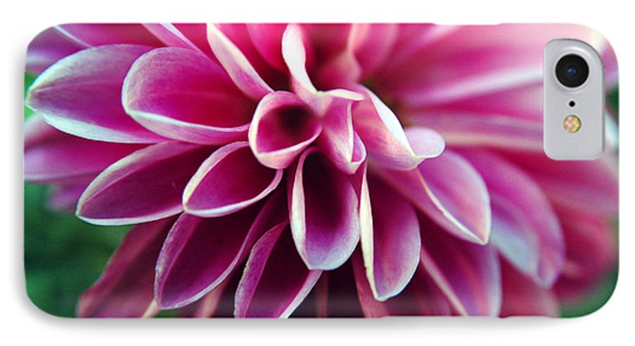 Flower IPhone 7 Case featuring the photograph Untitled by Kathy Schumann