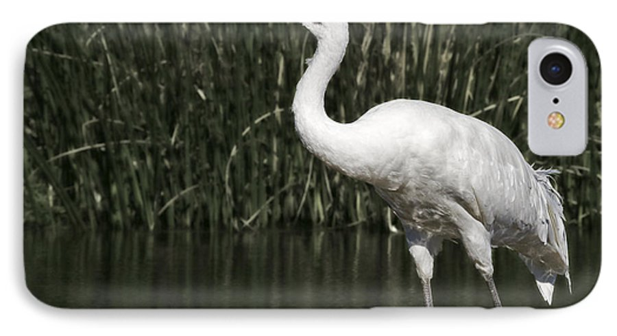 Whooping IPhone 7 Case featuring the photograph Whooping Crane by Al Mueller