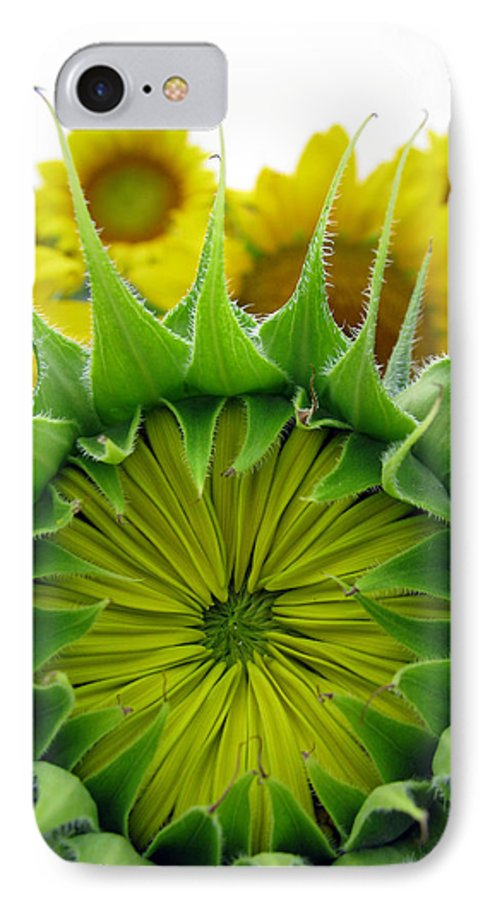 Sunflwoers IPhone 7 Case featuring the photograph Sunflower Series by Amanda Barcon