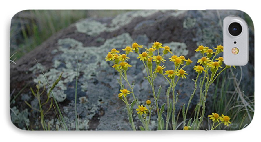 Flowers IPhone 7 Case featuring the photograph Untitled by Kathy Schumann