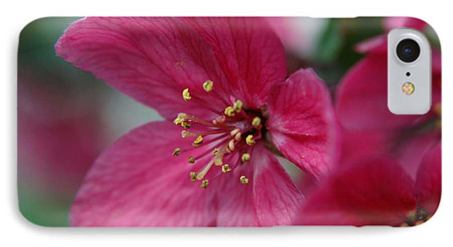 Flora IPhone 7 Case featuring the photograph Untitled by Kathy Schumann