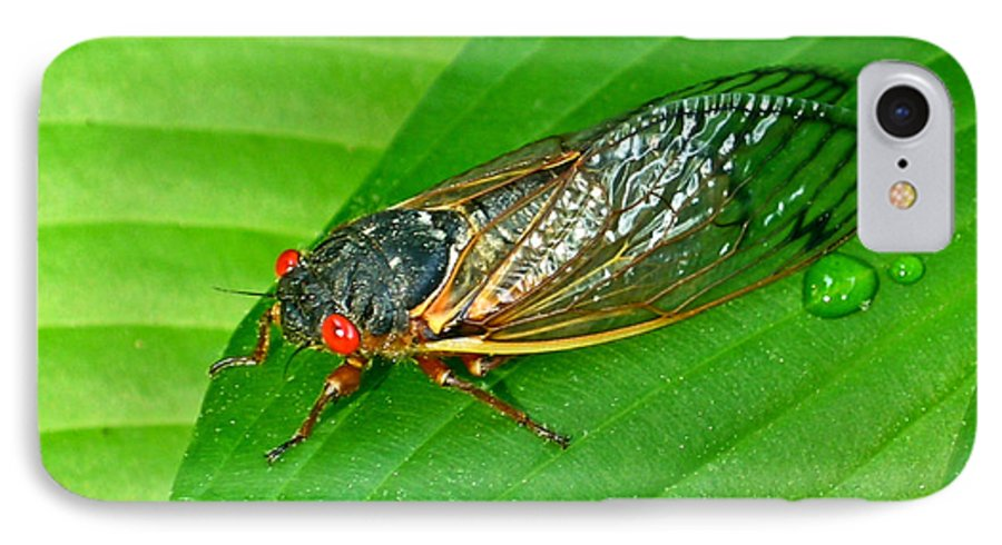 17 IPhone 7 Case featuring the photograph 17 Year Periodical Cicada by Douglas Barnett