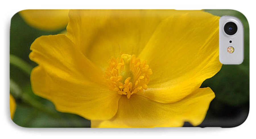 Yellow IPhone 7 Case featuring the photograph Untitled by Kathy Schumann