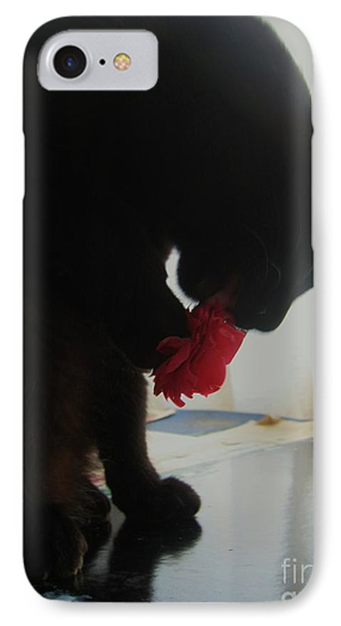 Photograph Cat Black Red Flower Camellia IPhone 7 Case featuring the photograph Cat Eating Camellia by Seon-Jeong Kim