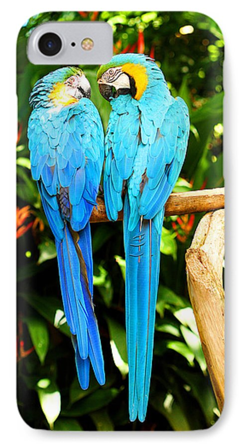 Bird IPhone 7 Case featuring the photograph A Pair Of Parrots by Marilyn Hunt