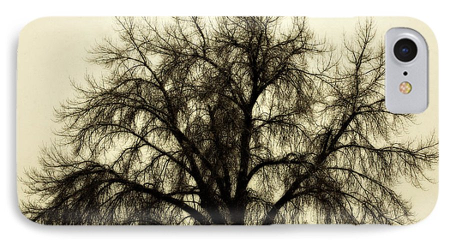 Tree IPhone 7 Case featuring the photograph A Winter's Day by Marilyn Hunt