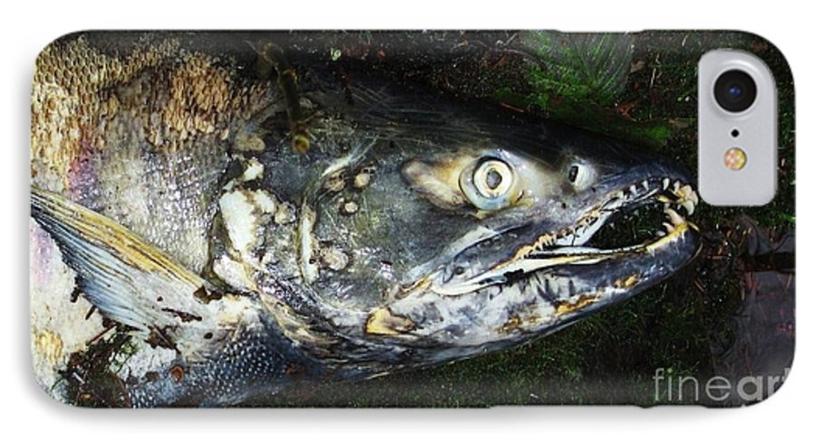Photography Salmon Death Fish River Malahat Hatch IPhone 7 Case featuring the photograph After Death by Seon-Jeong Kim
