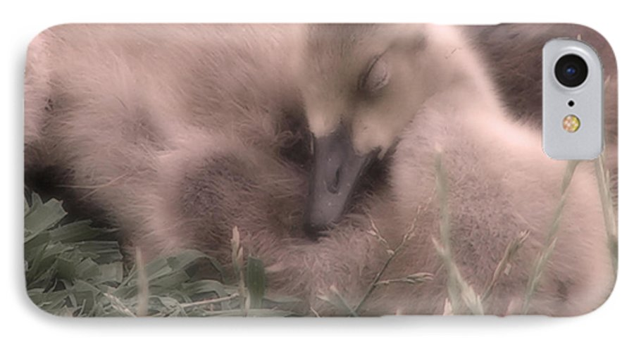 Goose IPhone 7 Case featuring the photograph All Is Right In My World by Kenneth Krolikowski