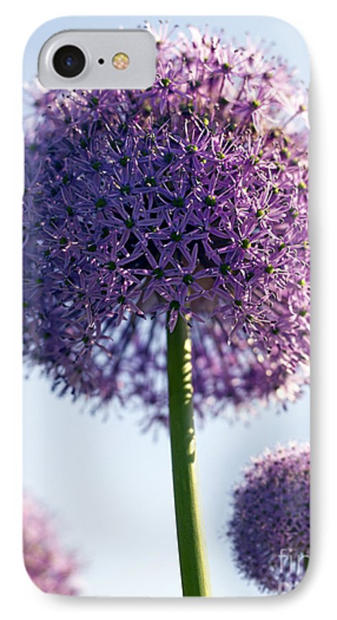 Allium IPhone 7 Case featuring the photograph Allium Flower by Tony Cordoza