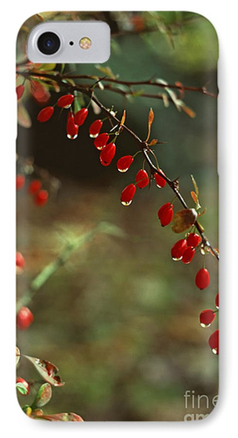 Pennsylvania IPhone 7 Case featuring the photograph American Barberry With Raindrops by Anna Lisa Yoder
