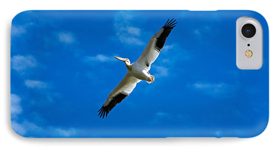 American IPhone 7 Case featuring the photograph American White Pelican by Marilyn Hunt