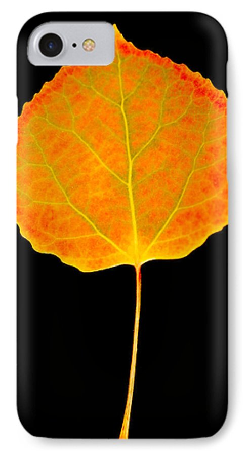 Leaf IPhone 7 Case featuring the photograph Aspen Leaf by Marilyn Hunt