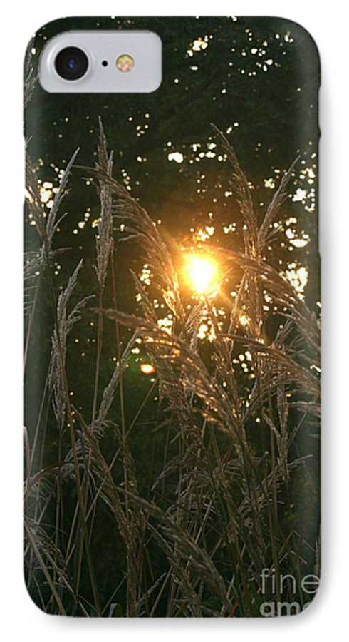 Light IPhone 7 Case featuring the photograph Autumn Grasses In The Morning by Nadine Rippelmeyer
