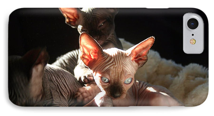 Photo IPhone 7 Case featuring the photograph Baby Sphynx Cats by Ruben Flanagan