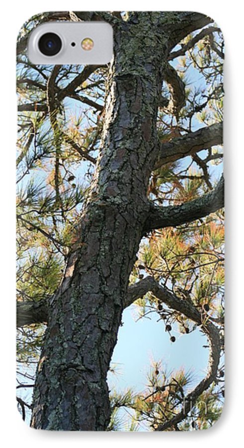 Tree IPhone 7 Case featuring the photograph Bald Head Tree by Nadine Rippelmeyer