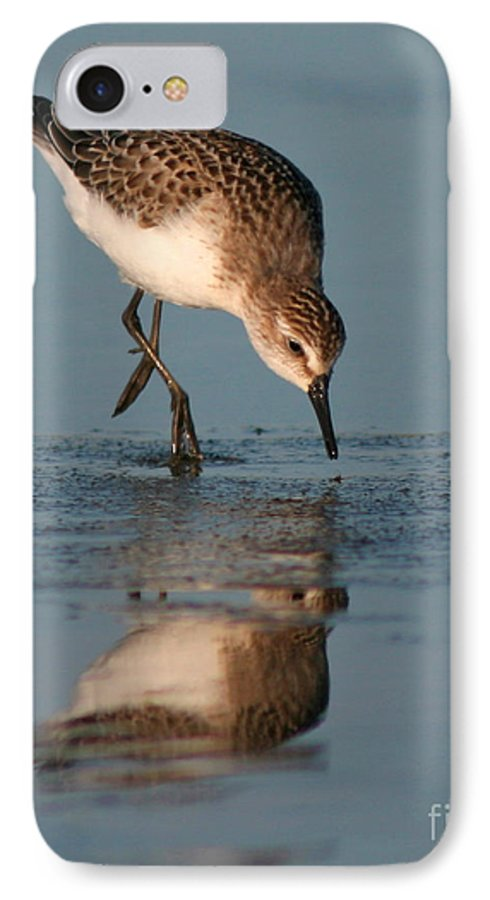 Sanderling IPhone 7 Case featuring the photograph Ballet Feeding Of A Sanderling by Max Allen