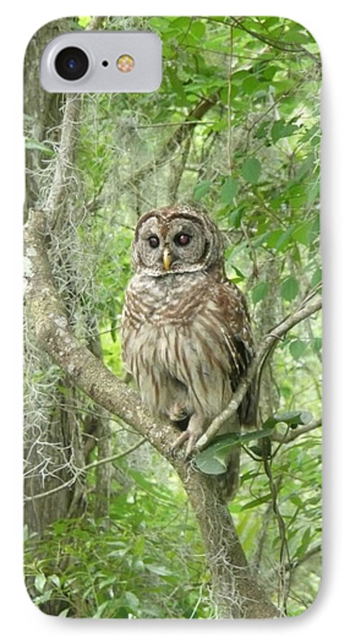 Nature IPhone 7 Case featuring the photograph Barred Owl I by Kathy Schumann