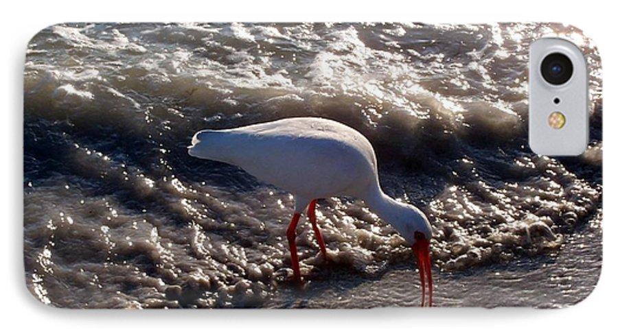 Beach IPhone 7 Case featuring the photograph Beach Bird by Elizabeth Klecker