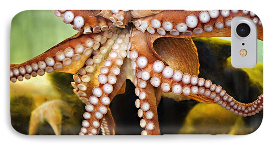 Octopus IPhone 7 Case featuring the photograph Beautiful Octopus by Marilyn Hunt