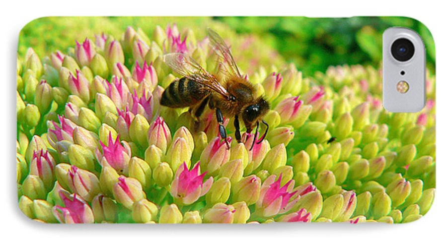 Flowers IPhone 7 Case featuring the photograph Bee On Flower by Larry Keahey