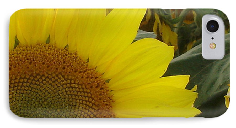 Bee's IPhone 7 Case featuring the photograph Bee On Sunflower 1 by Chandelle Hazen