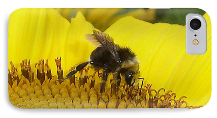 Bee's IPhone 7 Case featuring the photograph Bee On Sunflower 2 by Chandelle Hazen