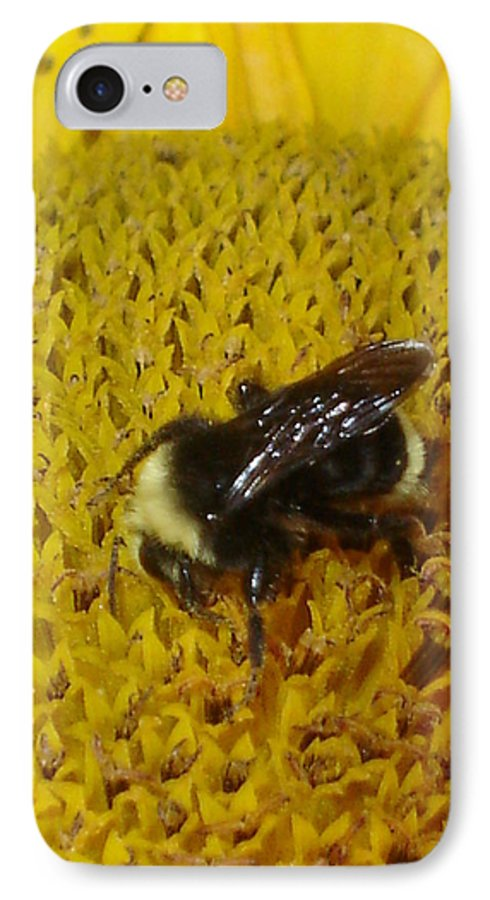 Bee IPhone 7 Case featuring the photograph Bee On Sunflower 4 by Chandelle Hazen