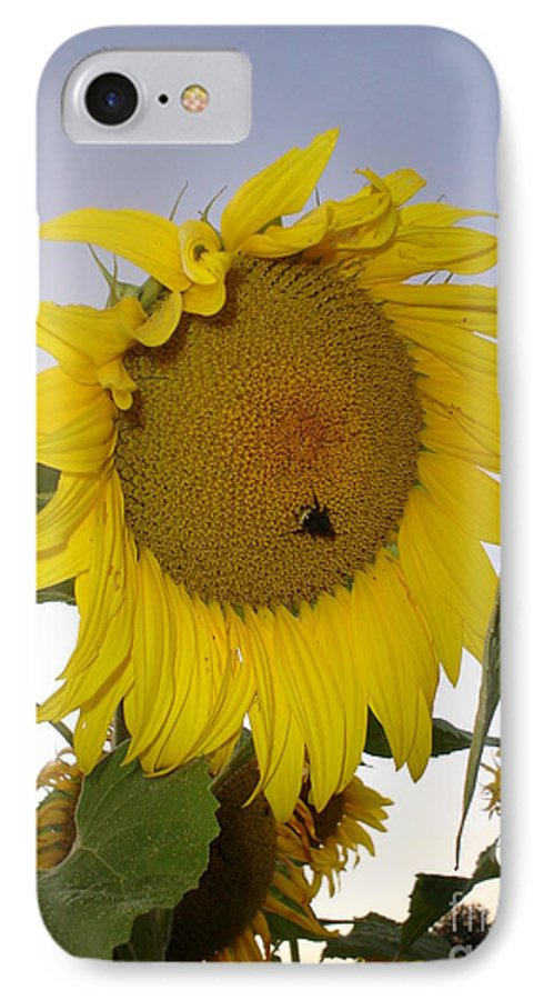 Bee On Sunflower IPhone 7 Case featuring the photograph Bee On Sunflower 5 by Chandelle Hazen