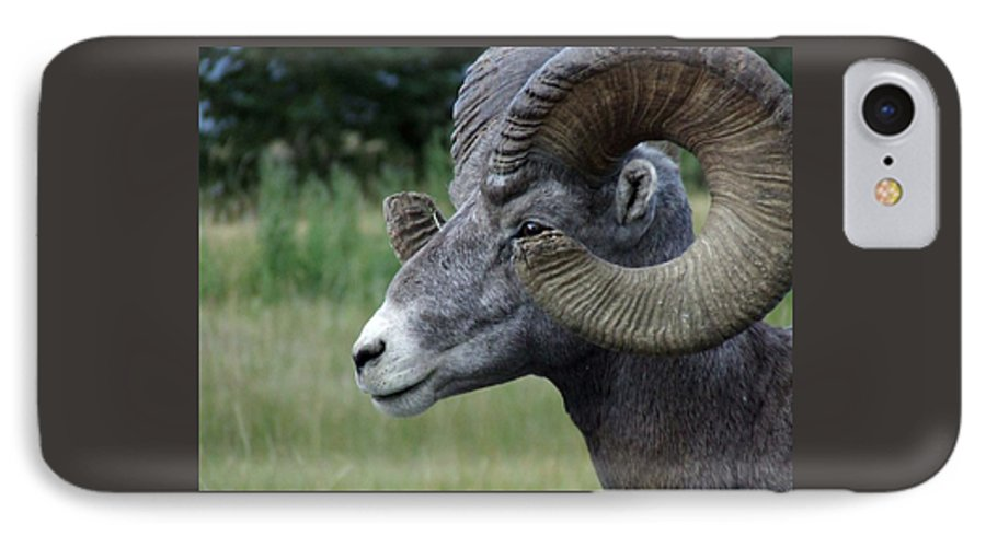 Big Horned Ram IPhone 7 Case featuring the photograph Bighorned Ram by Tiffany Vest